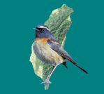 Birding in Taiwan