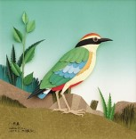Fairy Pitta by Chen Wen Wang